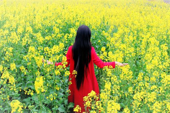 春天来了 盘点九江八大油菜花观赏地