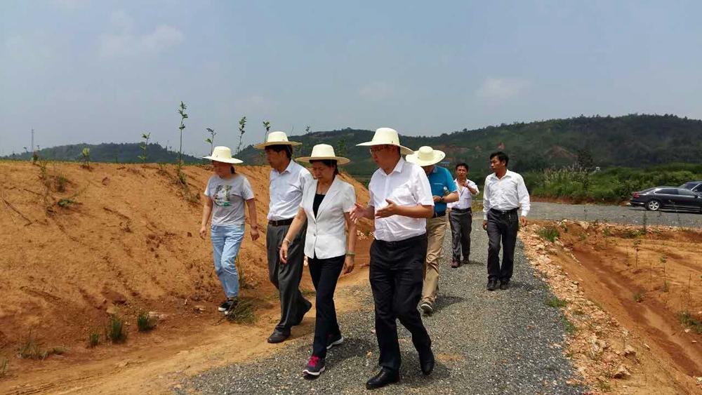 市人大常委会主任冯静到徐埠镇指导防汛救灾工作