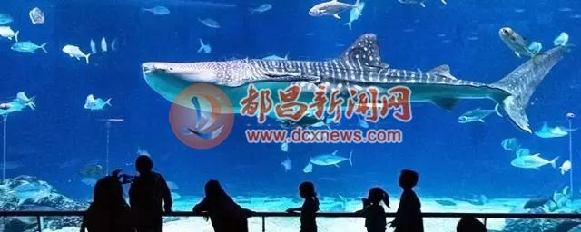 壁纸 海底 海底世界 海洋馆 水族馆 桌面 640_256