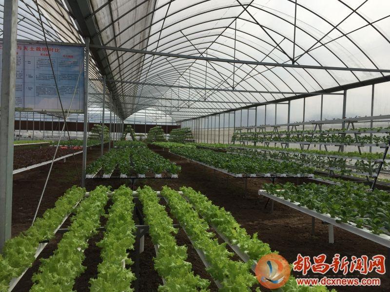 蔬菜养殖基地