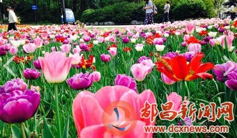 网站首页 户外旅游 >> 正文      武汉植物园位于武昌东湖之滨,磨山