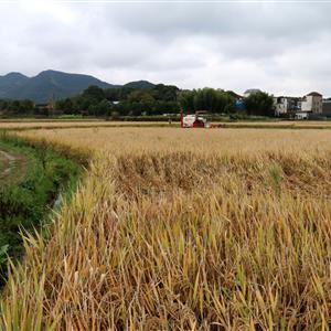 都昌左里农村田园风景